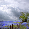 David and Carol Kelly - Bluebonnets and Spring...