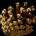 Jean Noren - Close up of Pinecone