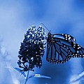 Angie Tirado - Butterfly In Blue