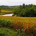Richard Singleton - Fall Corn in Virginia...