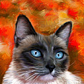Michelle Wrighton - Fire and Ice - Siamese...