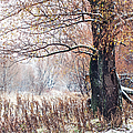 Jenny Rainbow - First Snow. Old Tree