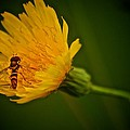 Andre Faubert - Fly On A Flower