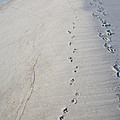 Diane Macdonald - Footprints and Pawprints