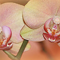 Sweet Moments Photography                  - Forever Orchids