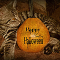 Brenda Conrad - Happy Halloween Cat Card