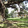 Anne Thigpen - Houmas House from under...