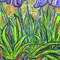 Carolyn Donnell - Irises in a sunny garden