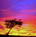 Bob and Nadine Johnston - Leaning Tree at Sunset