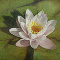 Cindy Wright - Lotus Blossom Textured