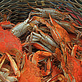 Ronald Olivier - Louisiana boiled crabs