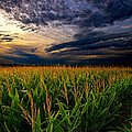 Phil Koch - Maize