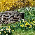 David Freuthal - Old Well and Daffodils