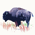 Steve McKinzie - Painted Buffalo