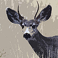 Steve McKinzie - Painted Mule Deer Buck