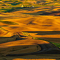 Dan Mihai - Palouse Shadow Play