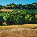 Steven Ainsworth - Paso Robles Vineyard