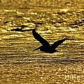 Al Powell Photography USA - Pelican Silhouette -...