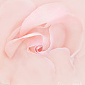 Jennie Marie Schell - Pink Abstract Rose Flower