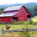 Duane McCullough - Red Barn and Rooster