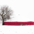 Tamyra Ayles - Red Barn in Winter