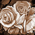 Jennie Marie Schell - Sepia Rose Flower Bouquet