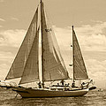 Kym Backland - Sepia Sailboat On The...