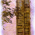 Judi Bagwell - Shuttered Doorway
