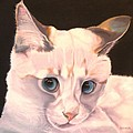 Susan A Becker - Siamese Rescue - Gem of...