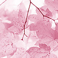 Jennie Marie Schell - Softness of Pink Leaves
