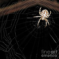 Ausra Paulauskaite - Spider In His Web At...