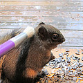 Kym Backland - Squirrel Gets A Massage