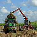 Ronald Olivier - Sugarcane planter