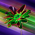 ImagesAsArt Photos And Graphics - Sunflower In Neon Colors
