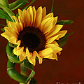 Inspired Nature Photography By Shelley Myke - Sunflower