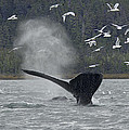 Nathan Mccreery - Whale 1277 Chilkat...