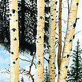 Barbara Jewell - Winter Aspens