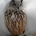 Colette Hera  Guggenheim - Wise Owl 3 Living in...