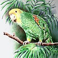 Arline Wagner - Yellow-headed Amazon...