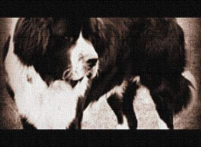 Altered Photograph PETS