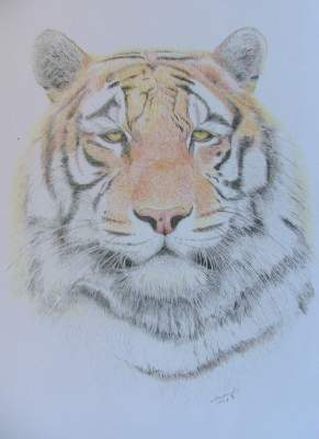 Best Colored Pencil Sketch
