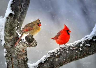 Monthly Logo Read the 5 Short rules