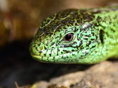 Reptile Photography