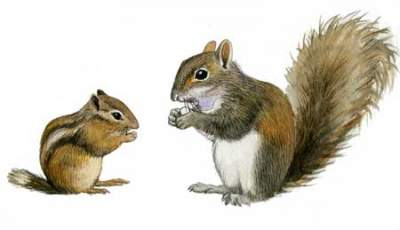 SQUIRRELS and CHIPMUNKS  PLEASE READ RULES  PROMOTION ONLY TWO RULES