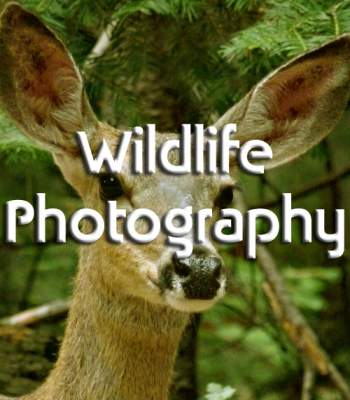 Wildlife Photography - Wild Animals