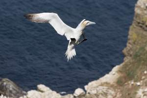 East Coast Seabird Safari