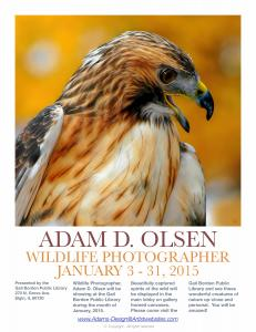 Wildlife Photography Gail Borden Public Library In  Elgin, IL Jan. 2015